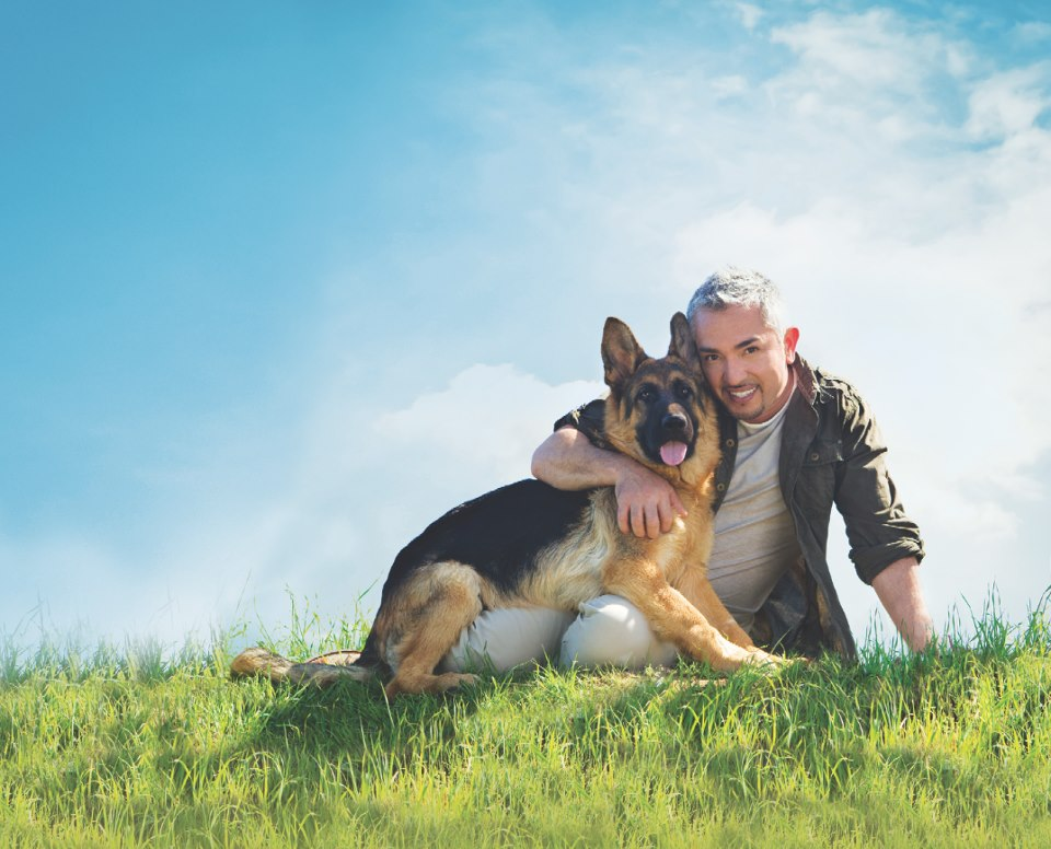 Cesar Millan, The Dog Whisperer, bought his German Shepherd puppy from Wustenberger-Land German shepherds