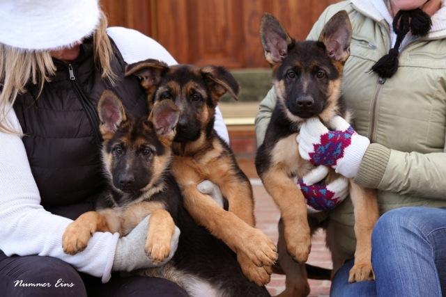 Puppies Temp