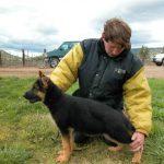 Wüstenberger-Land German Shepherds