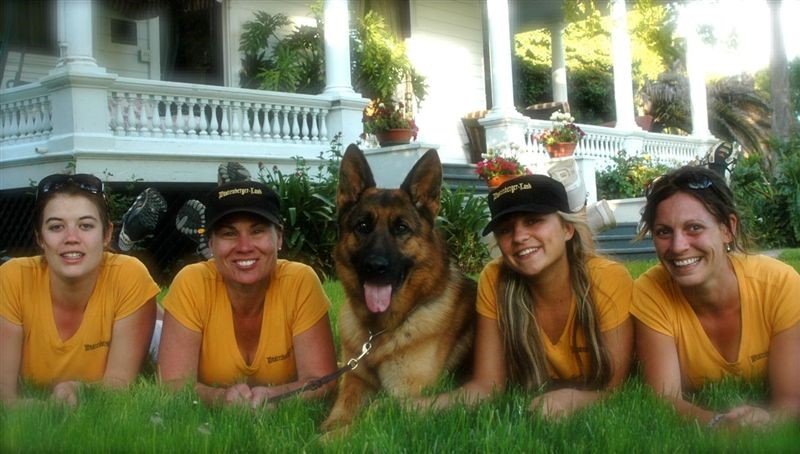 Trained Purebred German Shepherd Protection Dogs